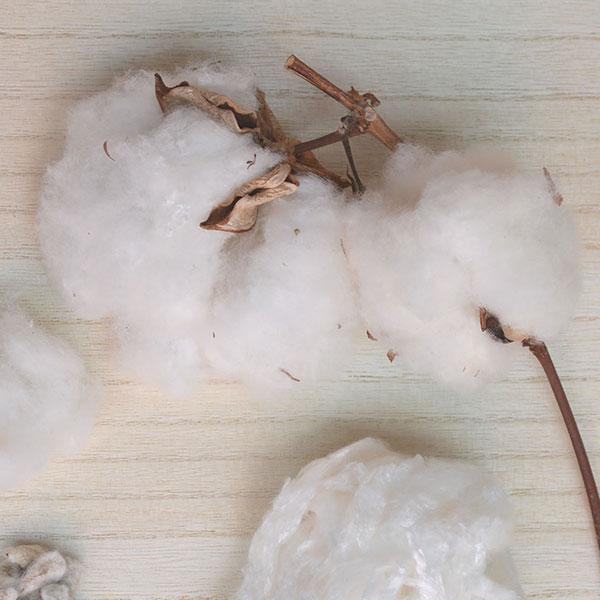 綿のカシミヤ